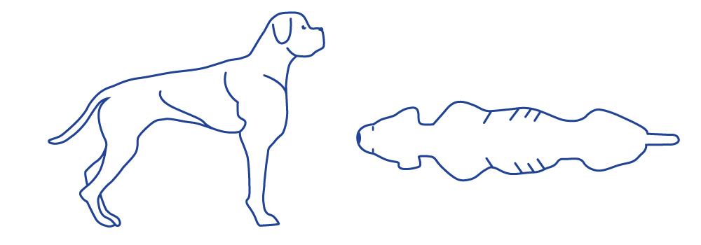 Gewichtindex-Hunde