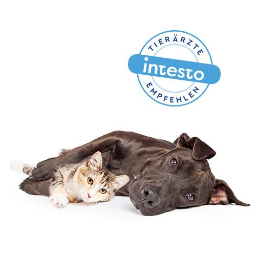 intesto-Tierärzte-empfohlen