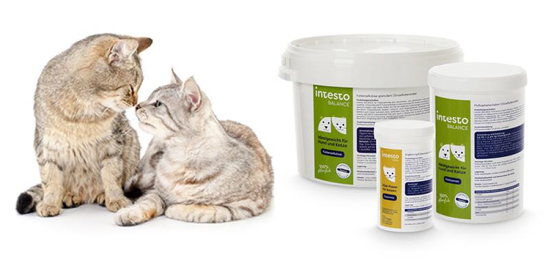 Futterzellulose-Produkte-Katze